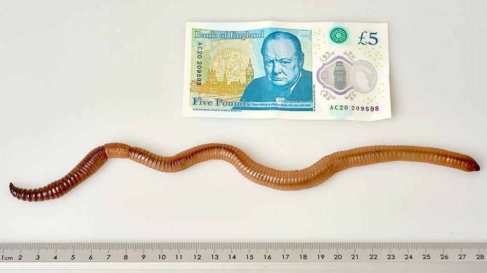 Dave Worm 2