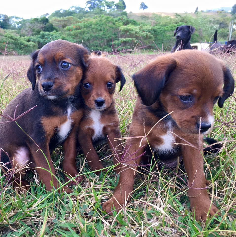 Land Of The Strays - Puppies